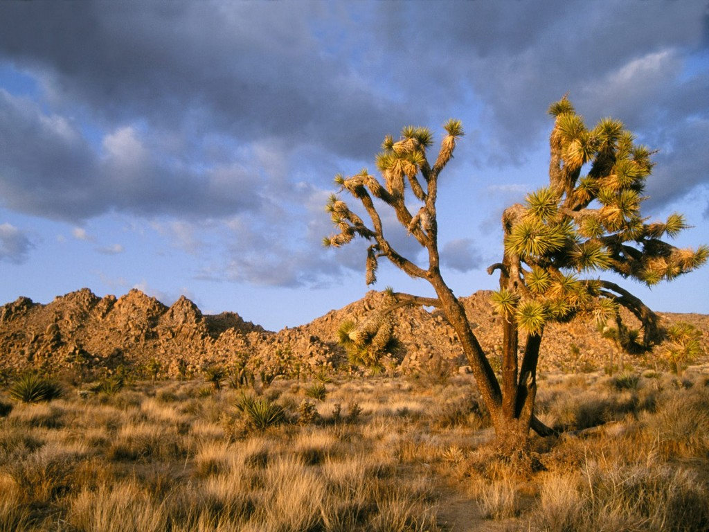 The mojavedesert occupies a significant portion of southern california