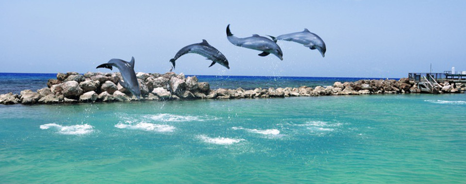 dolphincovejamaicablog1