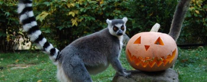 halloween_katta_copyright_krajnyak_zoltan