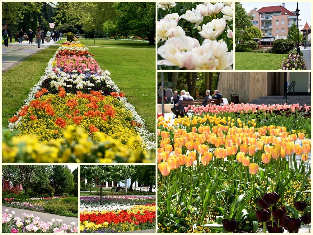Virágba borult a parkok, terek, gondos harmóniával megtervezett, tengernyi színpompás árvácska és tulipánágyások ejtik ámulatba a vendégeket