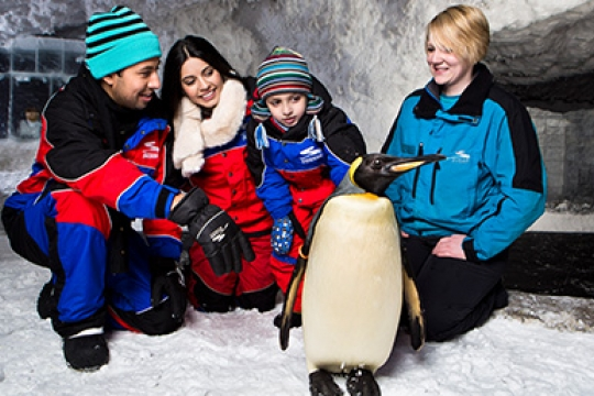 snow pinguin at Ski Dubai