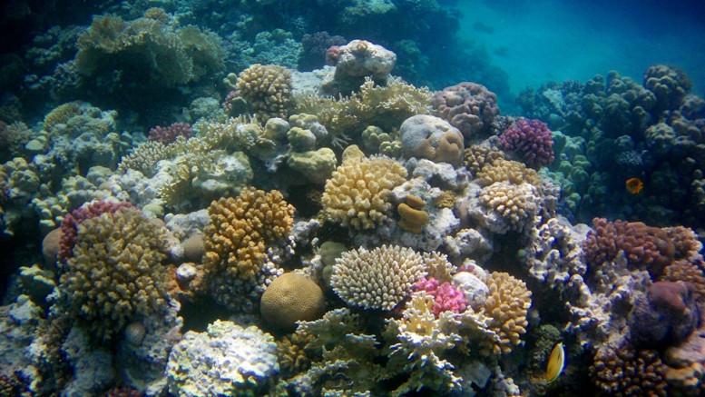 A Vörös-tenger mérhetetlenül gazdag élővilágáról is híres