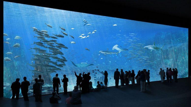 Európa legnagyobb akváriuma © Sophie et Jacques Rougerie