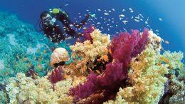 Hogy milyen vörös-tengeri élővilágot találunk, nagyban befolyásolja, hogy a tenger melyik részén fogunk búvárkodni...