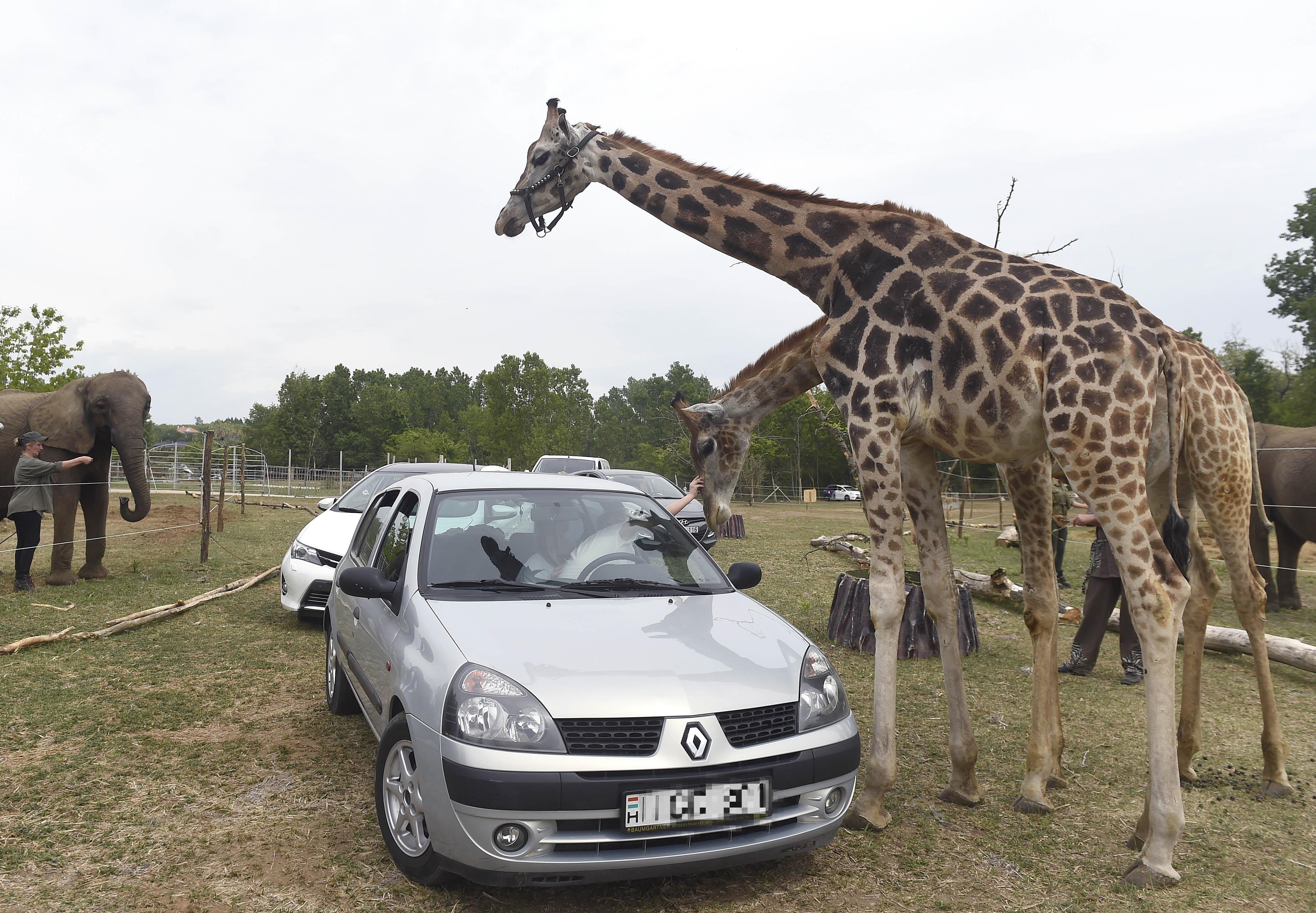 Megnyitott a Magyar Nemzeti Cirkusz Safari Parkja Szadán – Az Utazó Magazin
